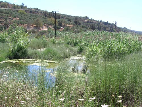 Wastewater Treatment with Constructed Wetlands in the Municipality of Episkopi